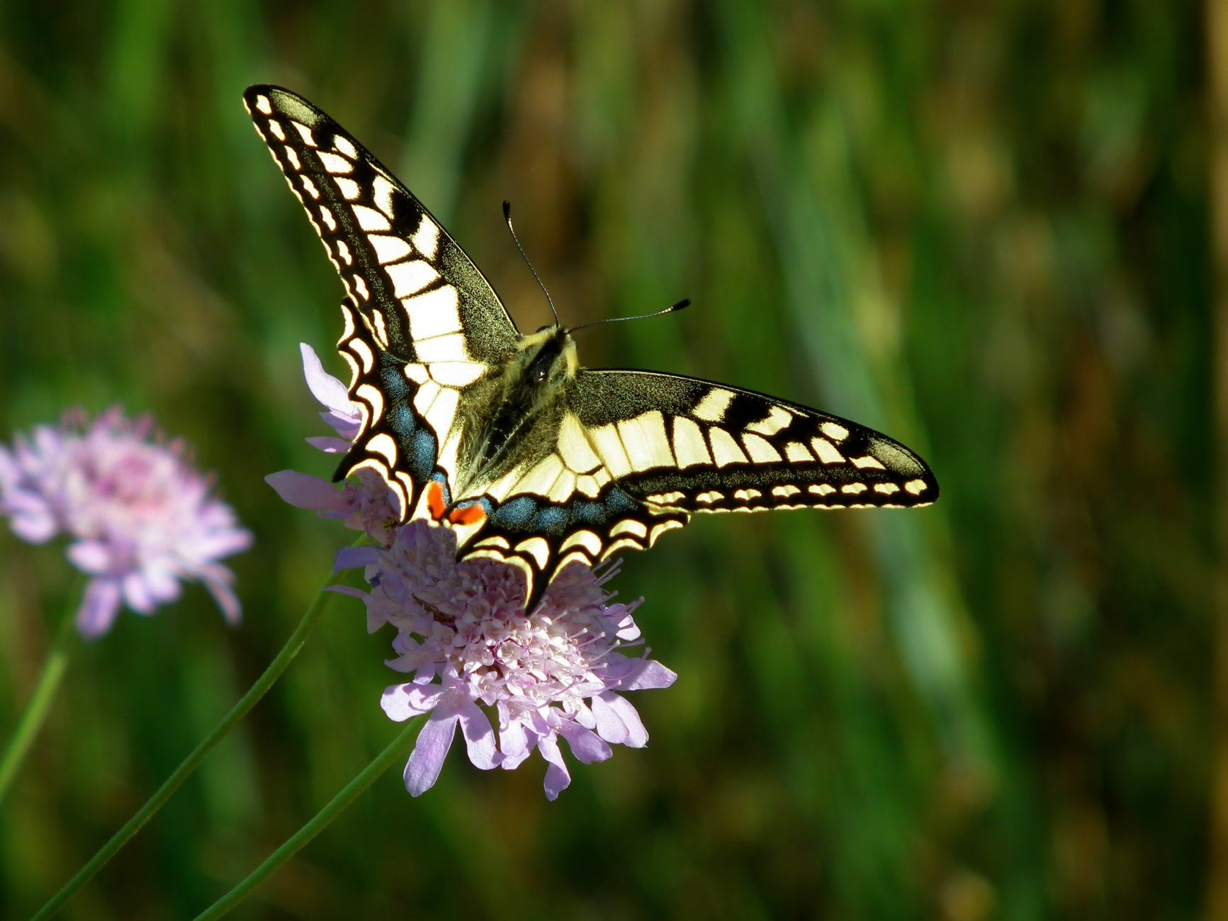 close up of butterfly pollinating on flower