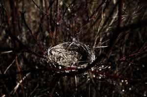 close up photography of bird nest